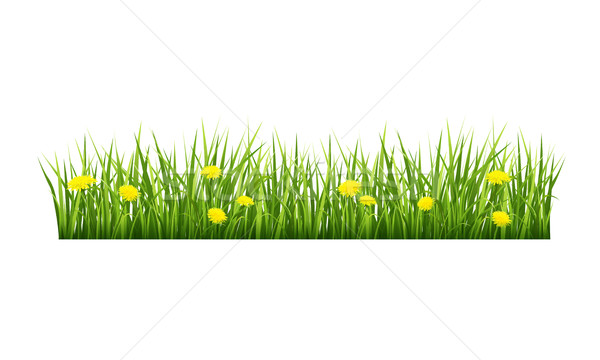 Grass with yellow flowers Stock photo © user_10003441