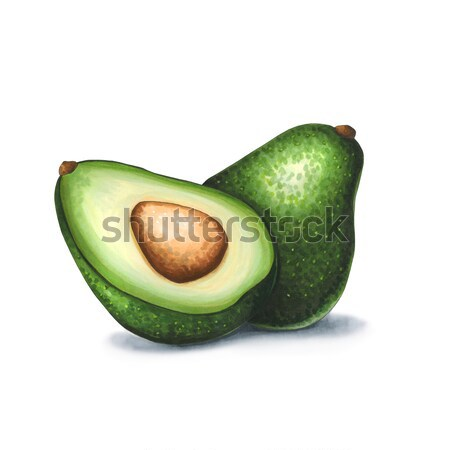 Avocado on a white background. Sketch done in alcohol markers Stock photo © user_10003441