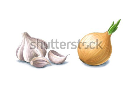 Garlic and onion on a white background. Sketch done in alcohol m Stock photo © user_10003441