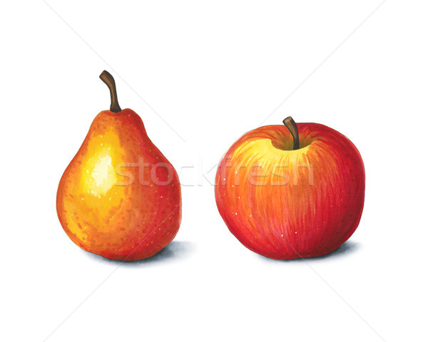 Apple and pear on a white background. Sketch done in alcohol mar Stock photo © user_10003441