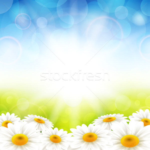 Flowers on the summer background Stock photo © user_10003441