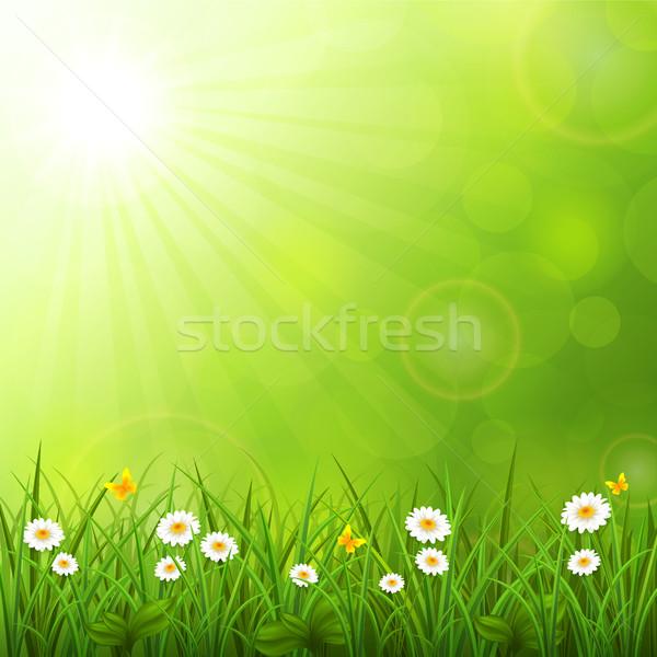 Nyár fű virág nap természet tájkép Stock fotó © user_10003441