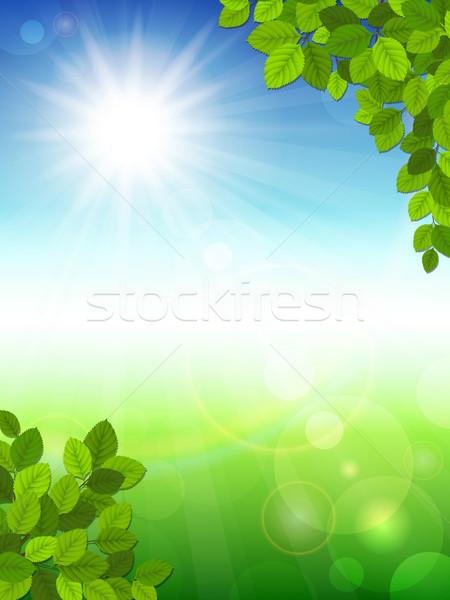 Nyár zöld levelek fa tavasz fa levél Stock fotó © user_10003441