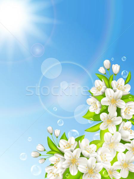 Bloei kers blauwe hemel zon natuur achtergrond Stockfoto © user_10003441