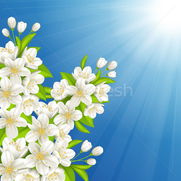 Blossoming cherry Stock photo © user_10003441