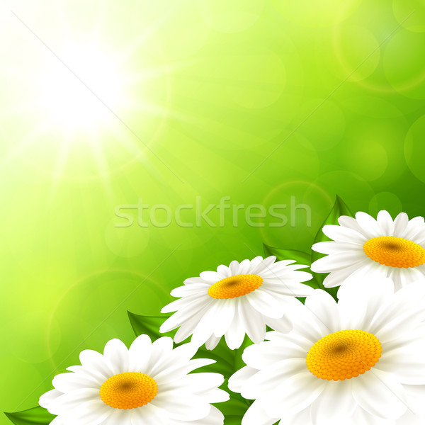Camomiles on a green background Stock photo © user_10003441