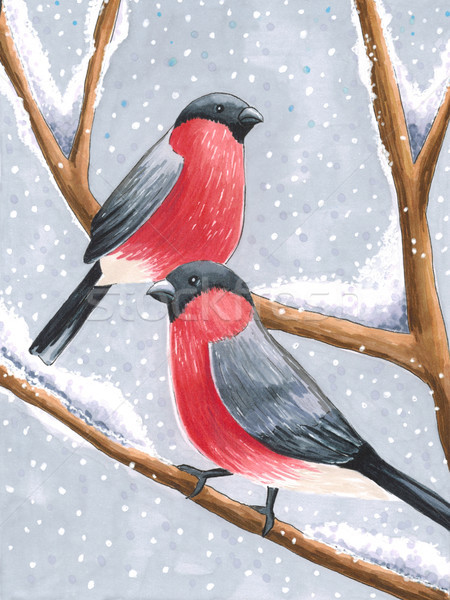 Sketch markers bullfinches on a snowy branch. Sketch done in alc Stock photo © user_10003441