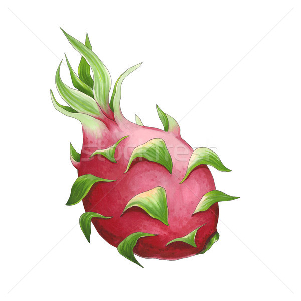 Dragonfruit on a white background. Sketch done in alcohol marker Stock photo © user_10003441