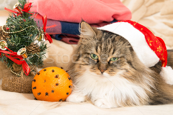 New year cat with Santa red hat looking at camera Stock photo © user_11056481