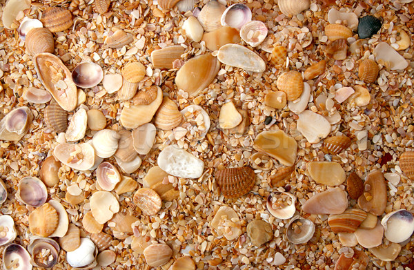 Sea shell background Stock photo © user_11056481