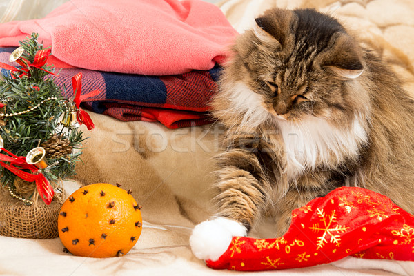 New year cat  playing with Santa red hat Stock photo © user_11056481