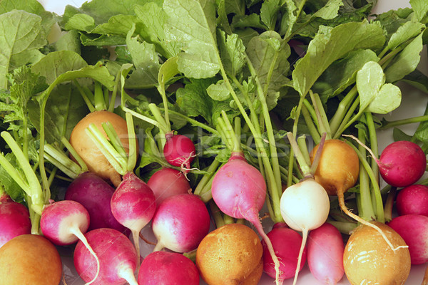 Fresh radish Stock photo © user_11056481