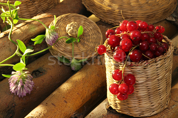 Red currant in wattled busket against background branches Stock photo © user_11056481