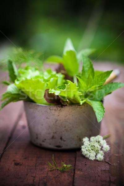 Fresh lettuce in the garden. Stock photo © user_11224430