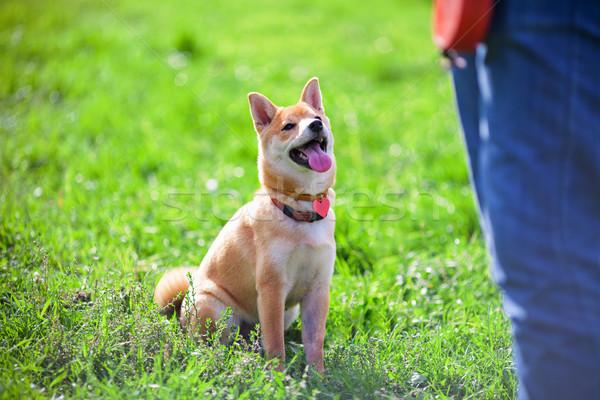 Training with dog Stock photo © user_11224430