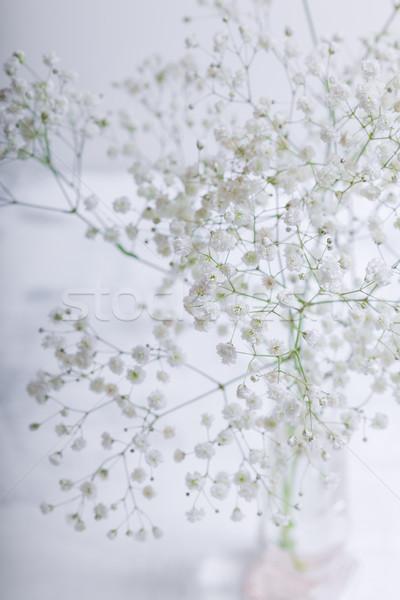 Witte bloemen witte plant tak groei fotografie Stockfoto © user_11224430