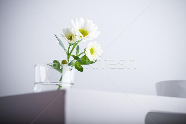 Beyaz krizantem çiçek cam Stok fotoğraf © user_11224430