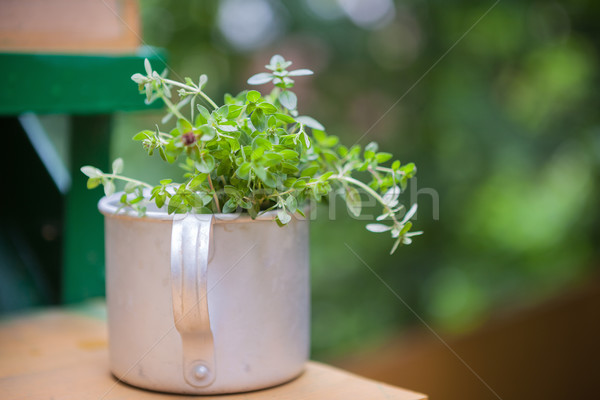 Bouquet of fresh thyme Stock photo © user_11224430