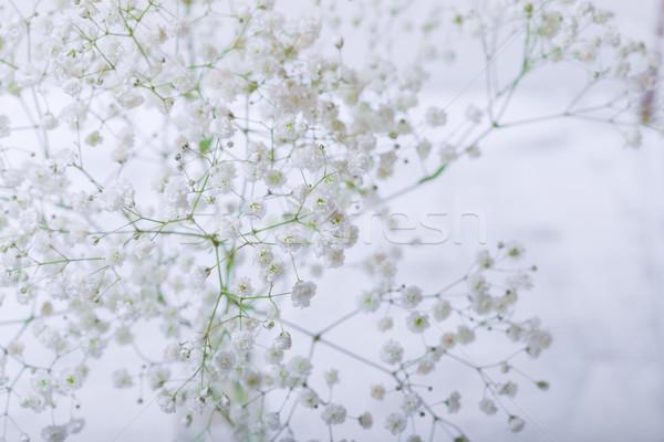 Fresche bianco fiore natura vita Foto d'archivio © user_11224430