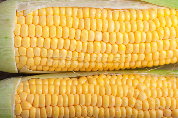 Fresh sweet corn Stock photo © user_11224430