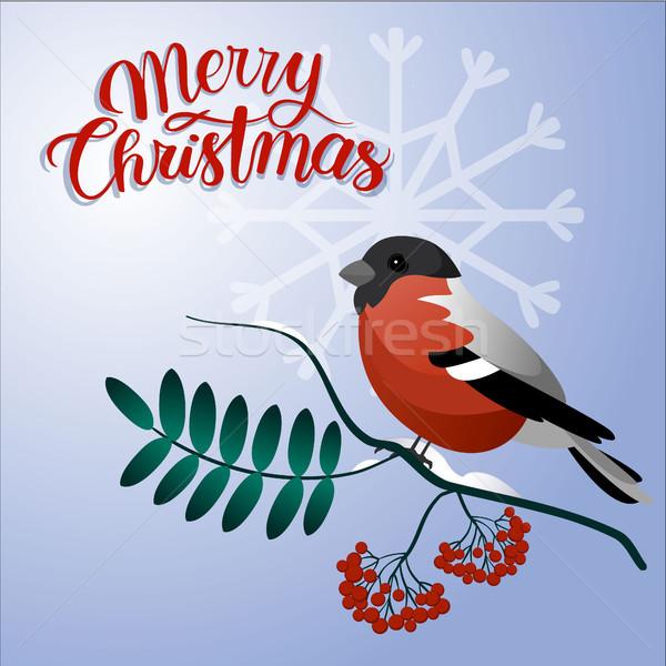 陽気な クリスマス はがき 支店 装飾 ベリー ストックフォト © user_11397493