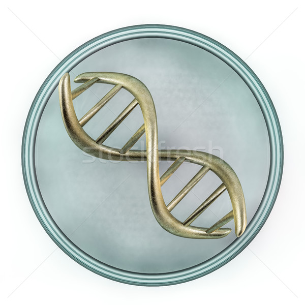 Standard of fragment of human DNA. 3D Stock photo © user_11870380