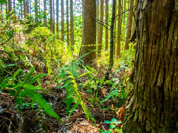 Mundo herança floresta Japão estrada natureza Foto stock © user_9323633