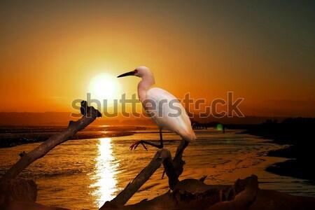 Eau plage août coucher du soleil mer fond Photo stock © user_9323633