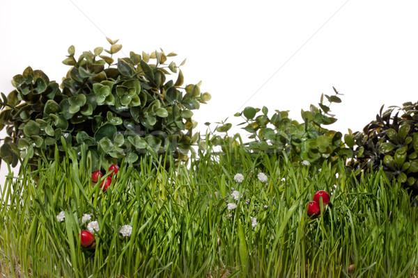 草 葉 液果類 緑の草 赤 孤立した ストックフォト © user_9834712