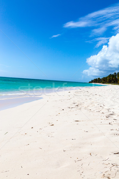 Isla Saona beach in the Caribbean Stock photo © user_9870494