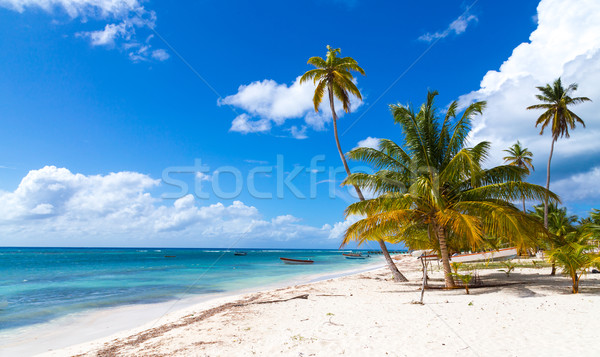 Beach in Saona Dominican Republic  Stock photo © user_9870494