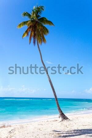 Palmboom strand oceaan Blauw eiland tropische Stockfoto © user_9870494