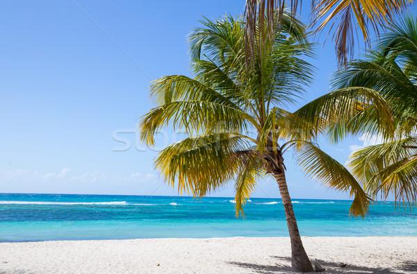 Foto stock: Palmeiras · praia · oceano · azul · ilha · tropical