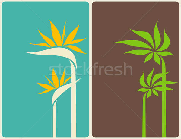 Bird of paradise flower and palm tree leaf. Vector illustration. Stock photo © ussr