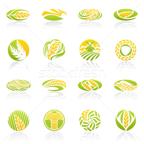 Wheat and rye. Vector logo template set.  Stock photo © ussr