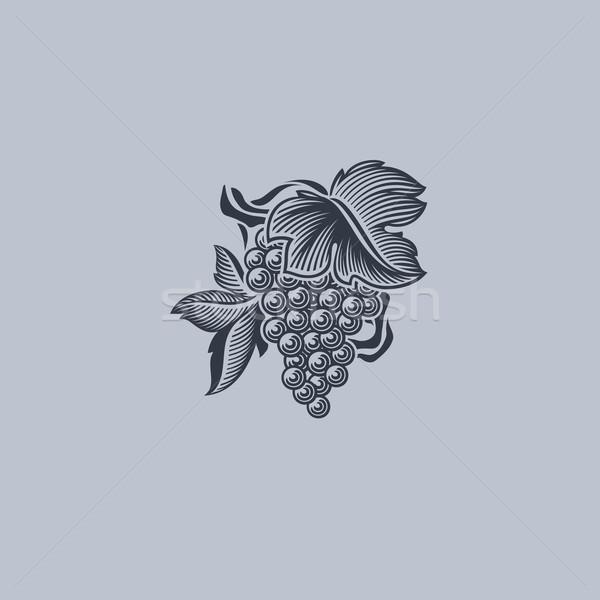 Grape with leaf. Element for design. Vector illustration Stock photo © ussr
