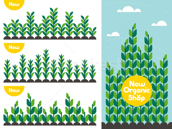 Agricultural crop pattern and organic food shop logo. Flat style Stock photo © ussr