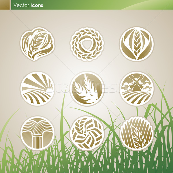 Wheat and rye. Vector logo template set. Elements for design. Ic Stock photo © ussr