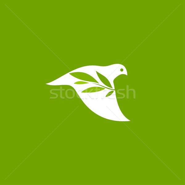 мира голубя оливкового филиала зеленый вектора Сток-фото © ussr