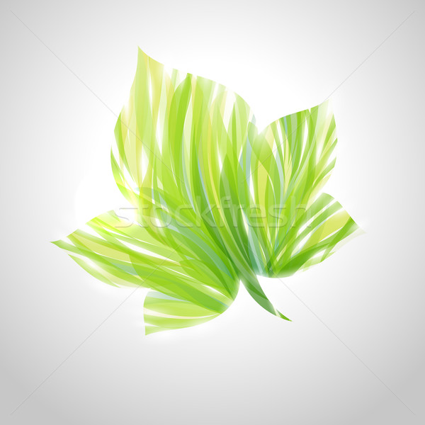 Shiny green striped maple leaf. Vector illustration. Stock photo © ussr