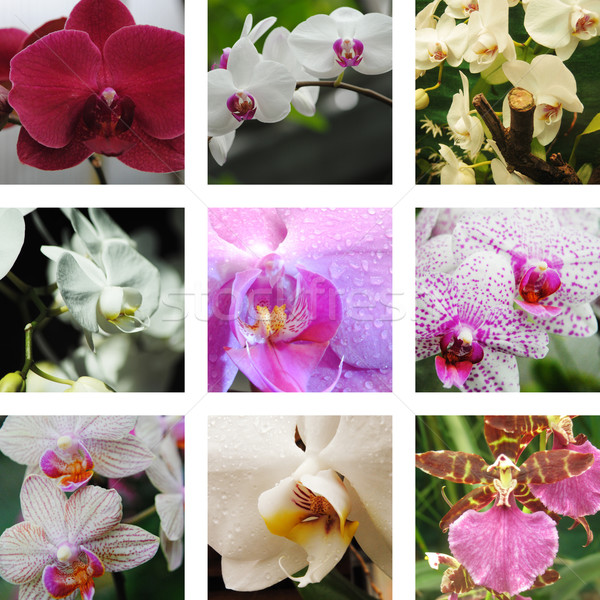 Dziewięć kwiaty kwiat wody piękna Zdjęcia stock © Ustofre9