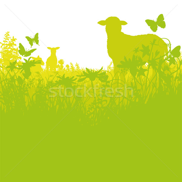 Lambs in the meadow Stock photo © Ustofre9