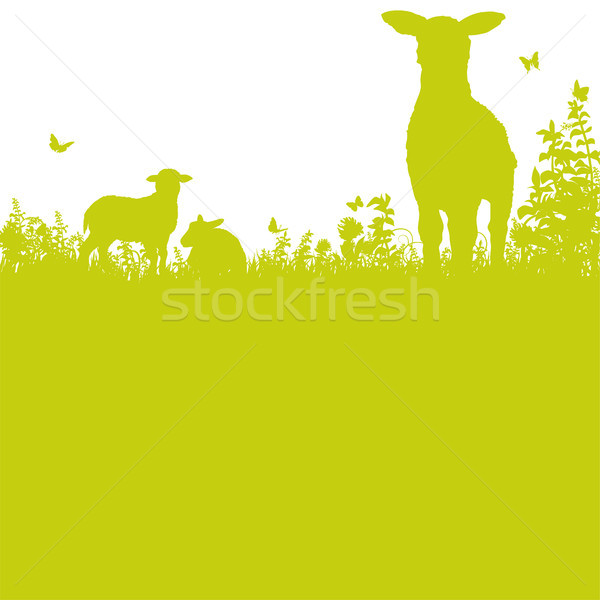 Sheep on the meadow Stock photo © Ustofre9