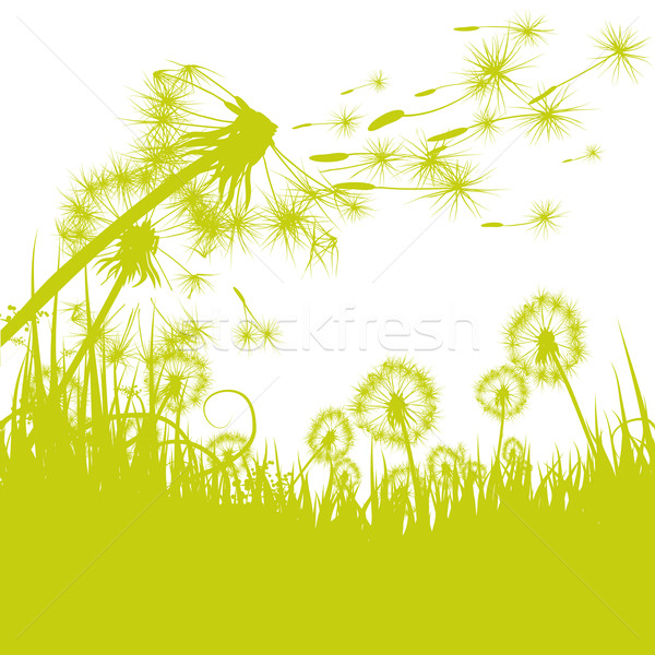 Dandelion in the wind Stock photo © Ustofre9