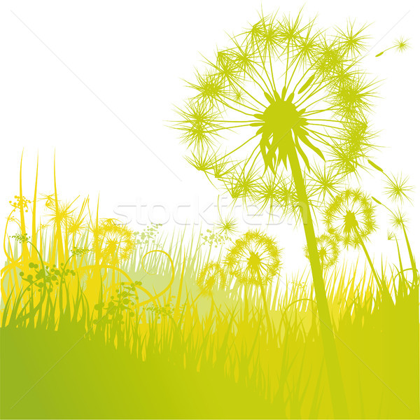 Stock photo: Dandelions and dandelion