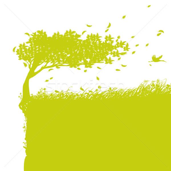 árvore borda grama floresta fundo verão Foto stock © Ustofre9