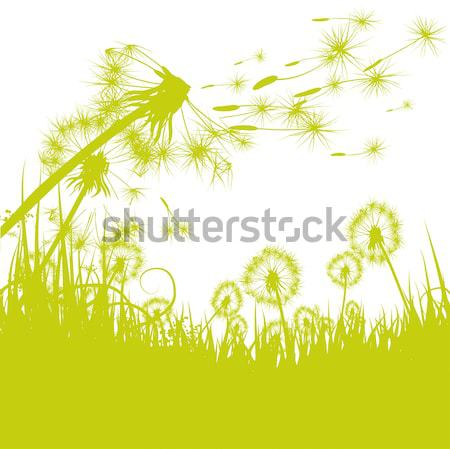 Dandelions in the green meadow Stock photo © Ustofre9