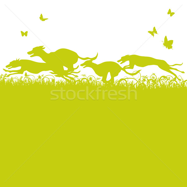 Blades of grass and running dogs and greyhounds Stock photo © Ustofre9