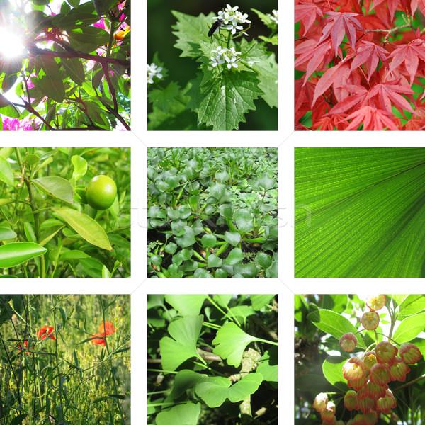 девять листва листьев фон растений Сток-фото © Ustofre9