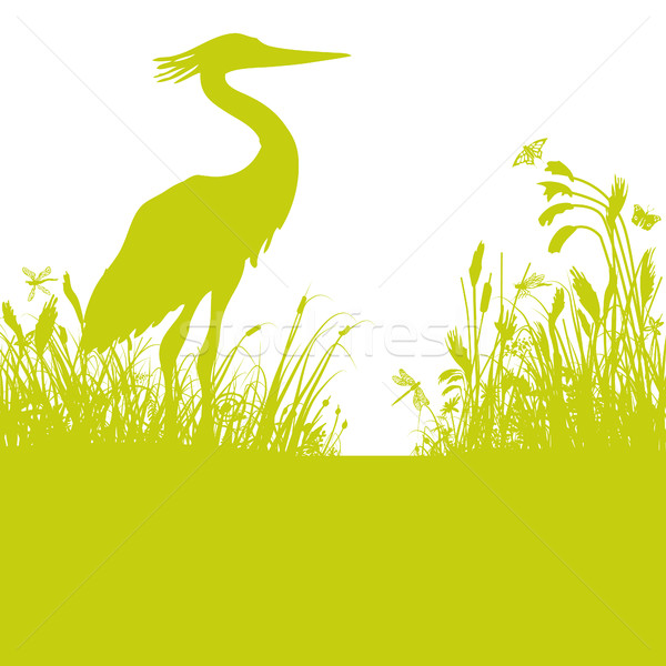 Heron in the reeds at the pond Stock photo © Ustofre9